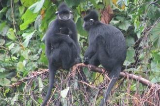 Khu nuôi thả bán hoang dã Núi Đôi - Điểm diễn giải môi trường lý tưởng về các loài linh trưởng quý hiếm tại VQG Phong Nha - Kẻ Bàng